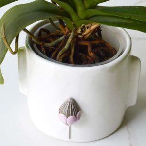 Protea Pot